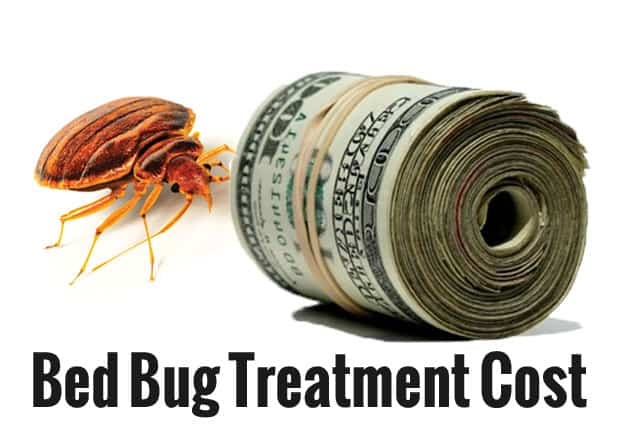 Does Professional Bed Bug Treatment Work