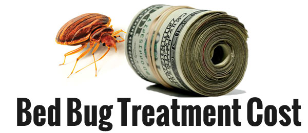 Cost effective ways to get rid of bed bugs