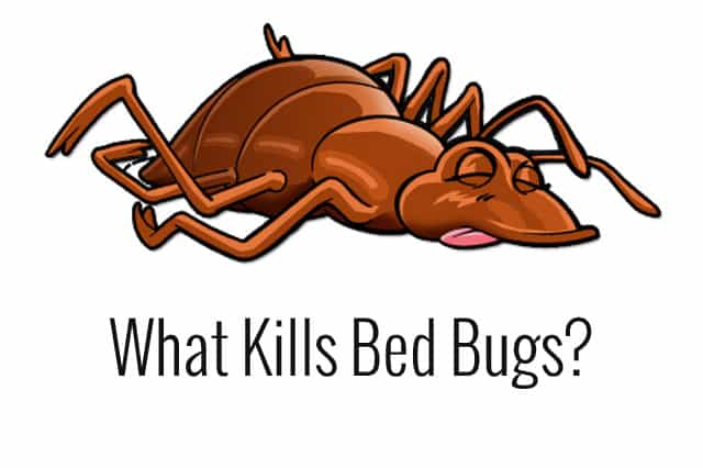 What Pesticide Kills Bed Bugs