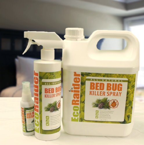 Bed Bug Treatment How To Kill Bed Bugs For Good