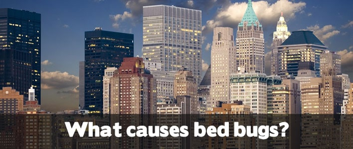 How Common Are Bed Bugs In Nyc