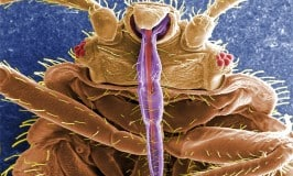 Bed bugs immune to sprays?