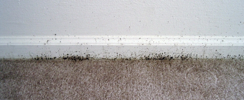 Bed Bug Excrement On Walls