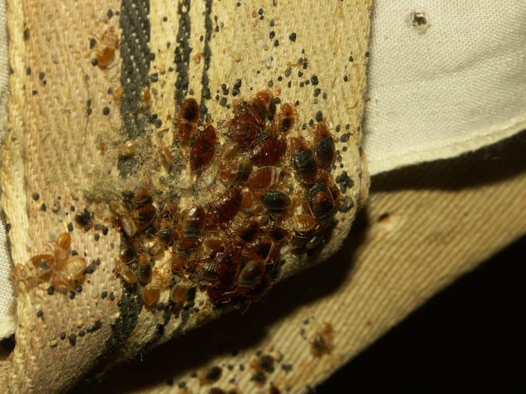 Bed Bug Treatment Site
