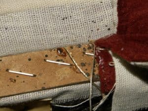 How To Tell If Your Couch Has Bed Bugs