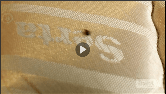 Hotel Impossible Bed Bugs