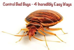 control-bed-bugs