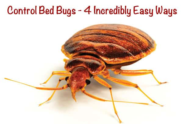 Control bed bugs 4 incredibly easy ways for How do i prevent bed bugs