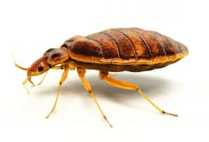 Find bed bugs